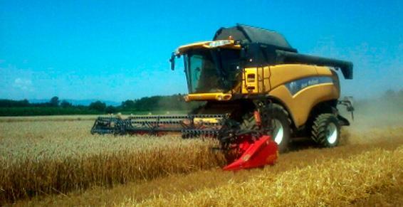 graines des céréales à Guéreins | Techni Agri Cartillier