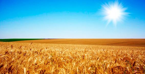 agriculteurs à Guéreins | Techni Agri Cartillier